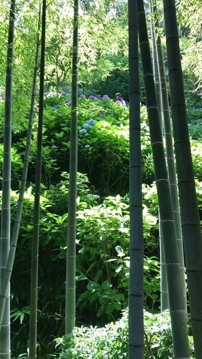 竹林と紫陽花その1